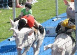 Club: Pig Racing at Larne RFC Saturday 25th July.